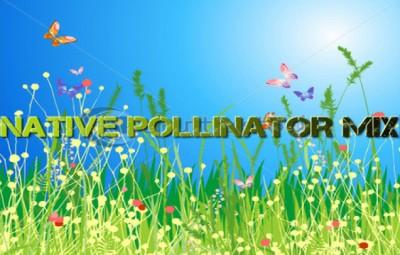 Native Pollinator Mix - Native Seed Mixes - Sunmark Seeds